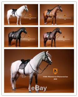 IN STOCK MrZ 1/6 Scale Germany Hannover Horse Hanoverian Animal Model 12 Figure