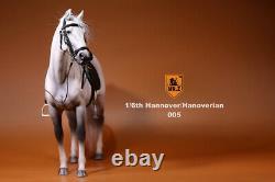 Mr. Z Germany Hannover Hanoverian Gray Horse 1/6 Animal Model Figure Decoration